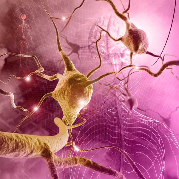 Numbness - Brain, Spinal Cord, and Nerve Disorders - MSD
