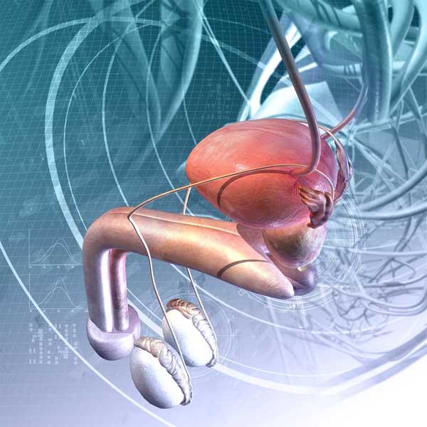 prostatitis e hinchazón del pene