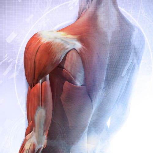 Dolor de huesos y cansancio muscular